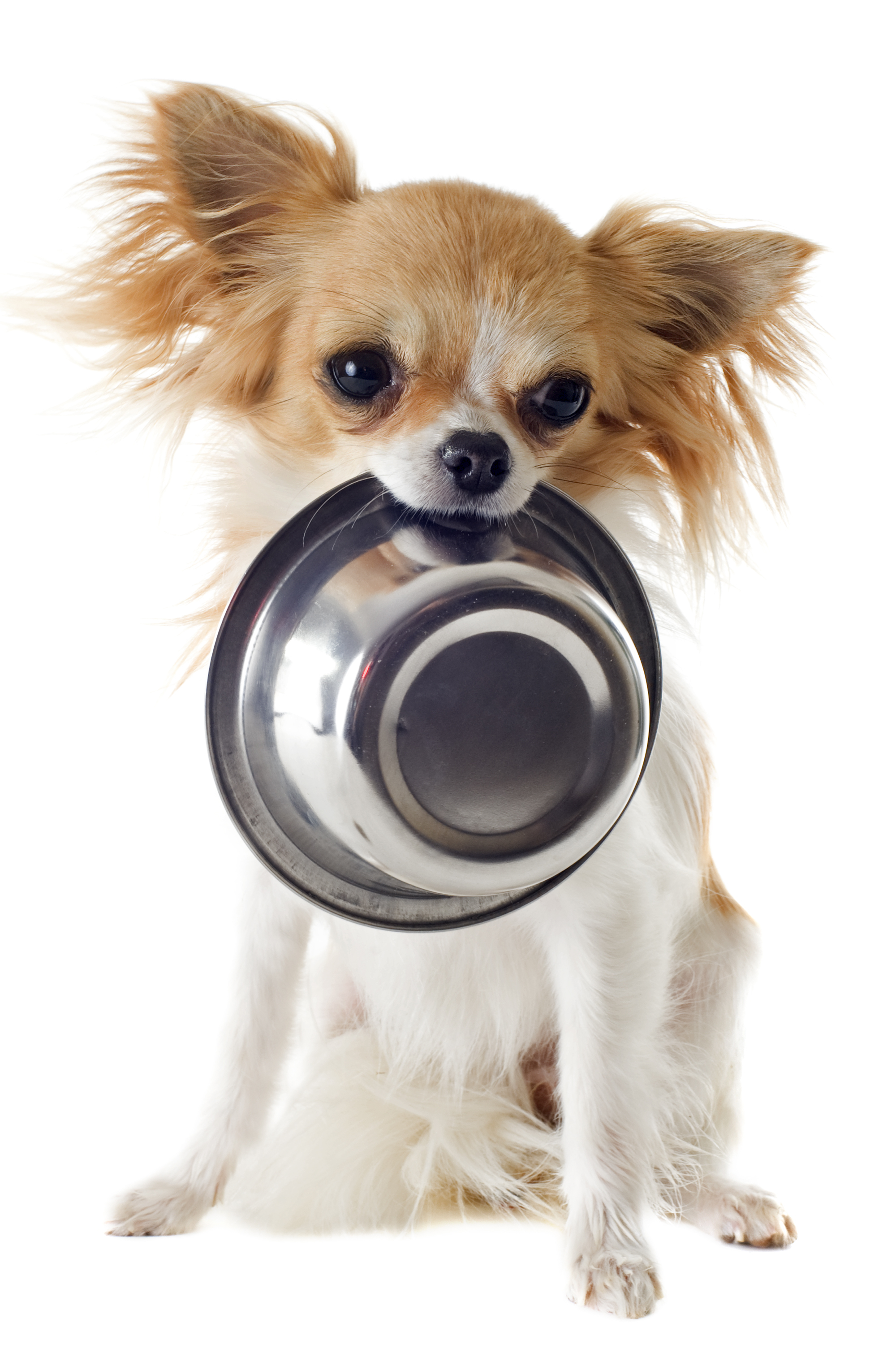 Dog Food Global Pet Foods
