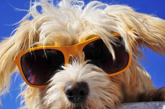 Image result for Enjoying summer with your dog