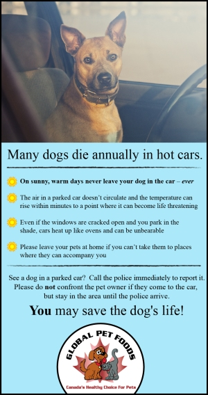 dog_in_hot_car2014-01