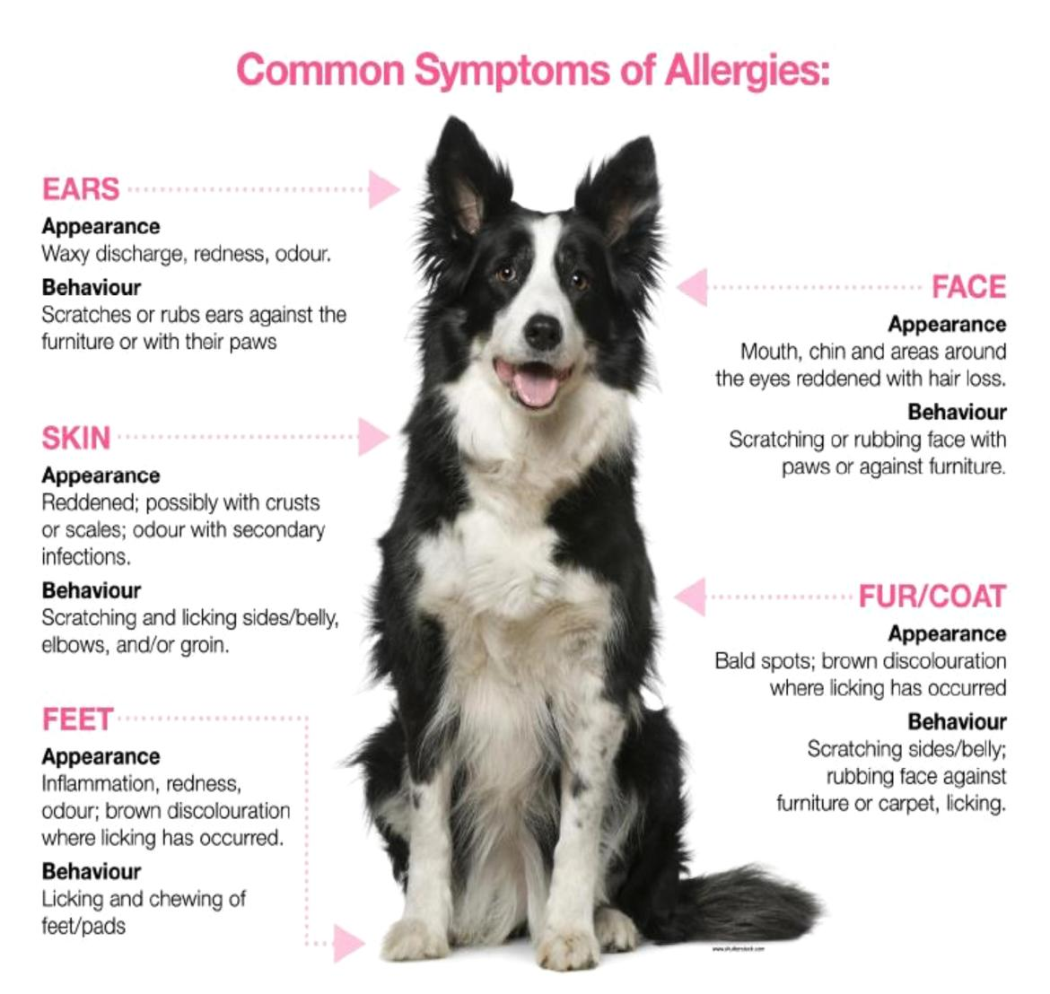 ... Be in the Know About Common Pet Allergy Symptoms. | Global Pet Foods