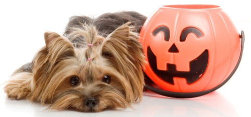 dog with candy container