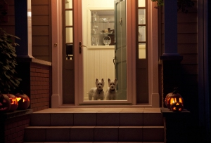 Two dogs at the door on Halloween night