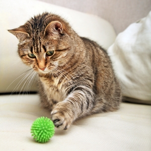 cat playing with green ball