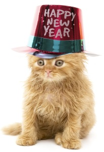 happy new year cat2016