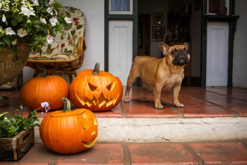 dog-on-front-stoop-with-pumpkins