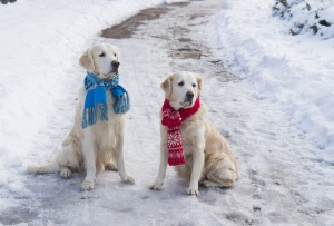two-dogs-in-winter